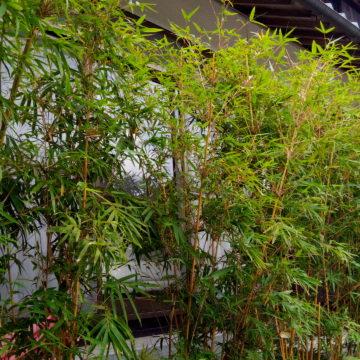 庭の竹を整えました